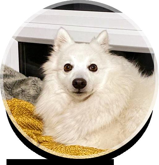 Yuki Testimonial